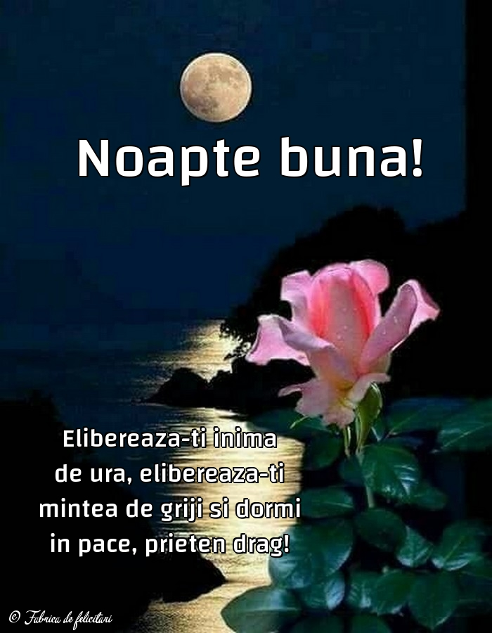 Felicitari de Noapte